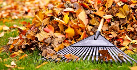 Autumn Garden Tools - Essential garden tools for autumn leaf clearing and plant pruning at great prices.